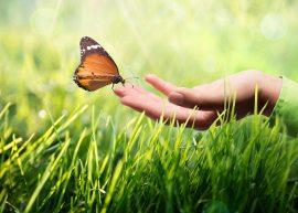 Você preserva o meio ambiente?