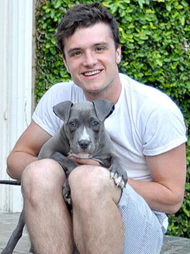 Josh Hutcherson adota filhote de pitbull