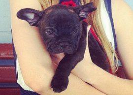 Sophia Abrahão apresenta seu novo cachorrinho!