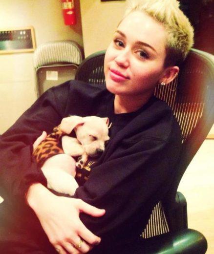 Miley Cyrus adota filhote de cachorro