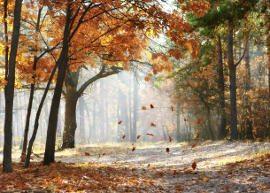 clipes de outono