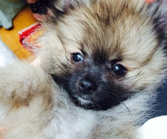 Miley Cyrus ganha outro cachorro