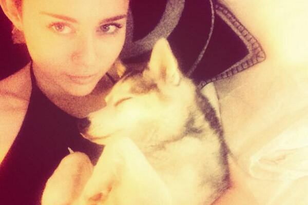 Miley Cyrus chora ao dedicar música para seu cão falecido