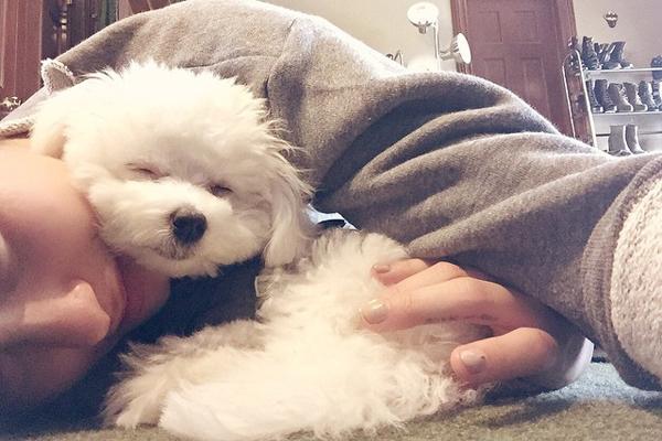 """Demi Lovato perde seu cachorro """"Buddy"""", em acidente trágico"""