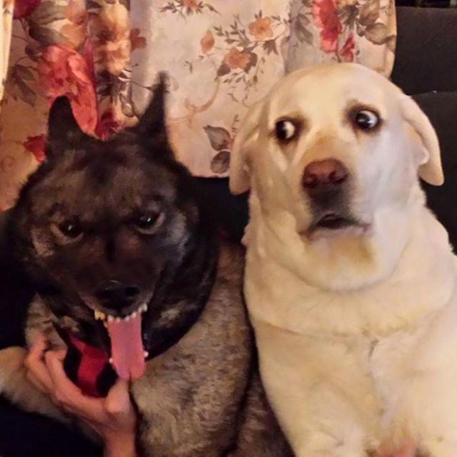 Cachorros que representam como foi seu ano de 2015