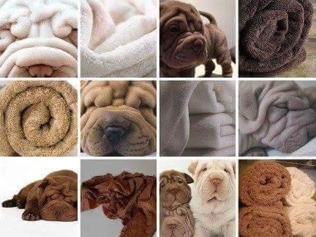 catioro ou cobertor