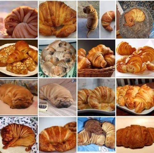 catioro ou croissant