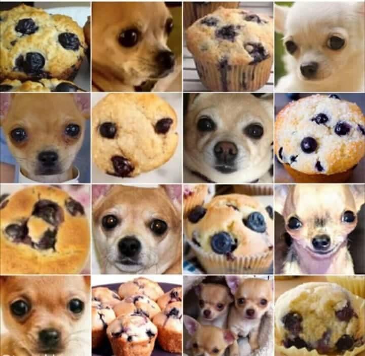 catioro ou muffin