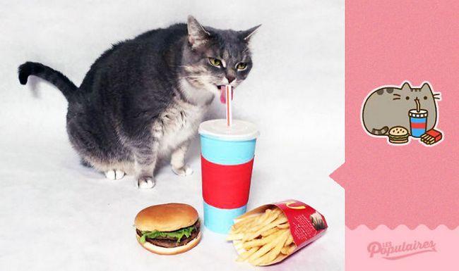 Pusheen gato da vida real comendo