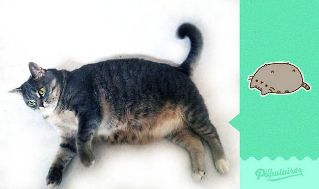 Gato Pusheen da vida real deitado