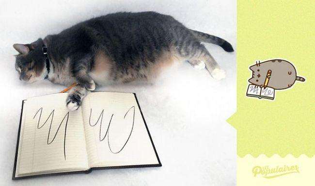 gato pusheen da vida real escrevendo