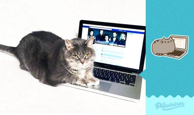 gato pusheen da vida real no notebook