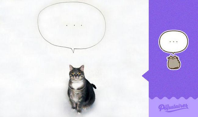 gato pusheen da vida real pensando