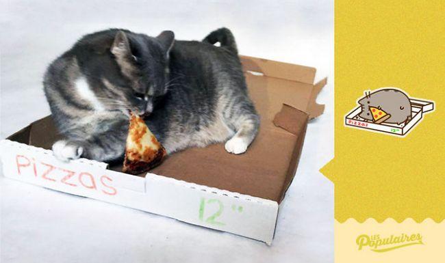 gato pusheen da vida real pizza