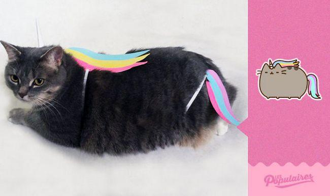 gato pusheen da vida real unicornio