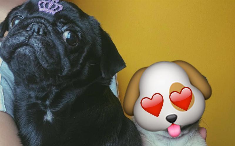 Conheça Potyra, a nova cachorrinha de Gusta Stockler