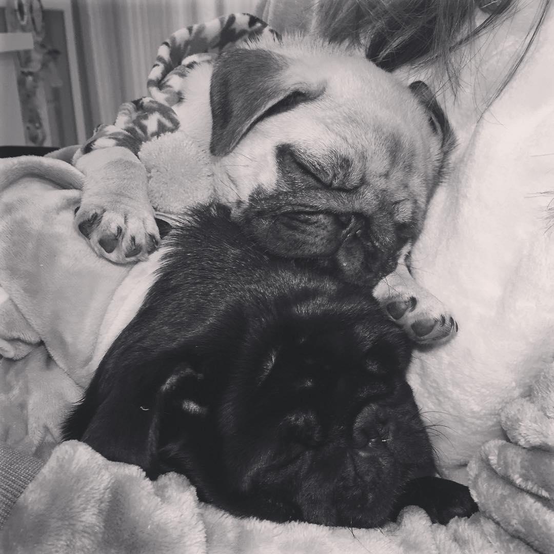 Potyra e Vilma, cachorras da kéfera