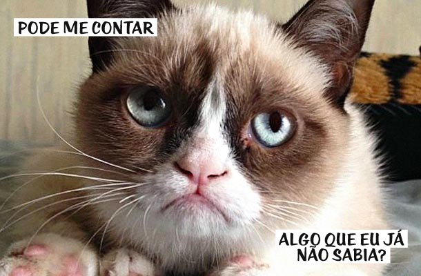 gato mal-humorado