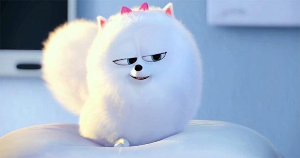 cachorrinho branco peludo