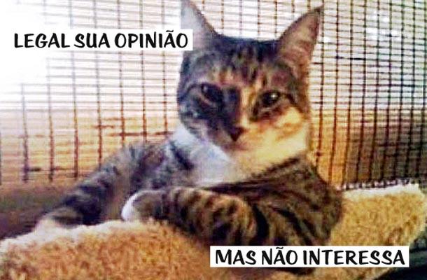 gato debruçado
