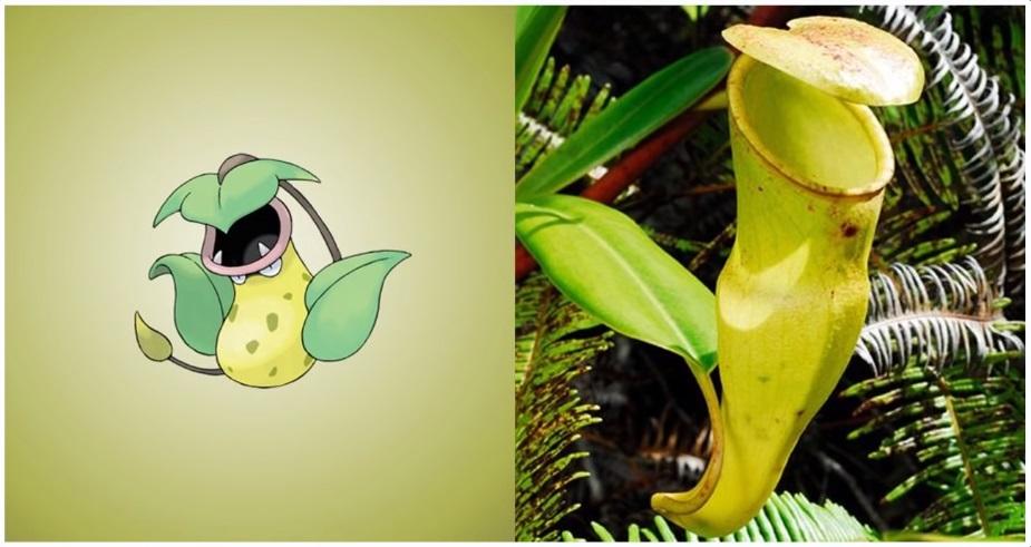 planta jarro