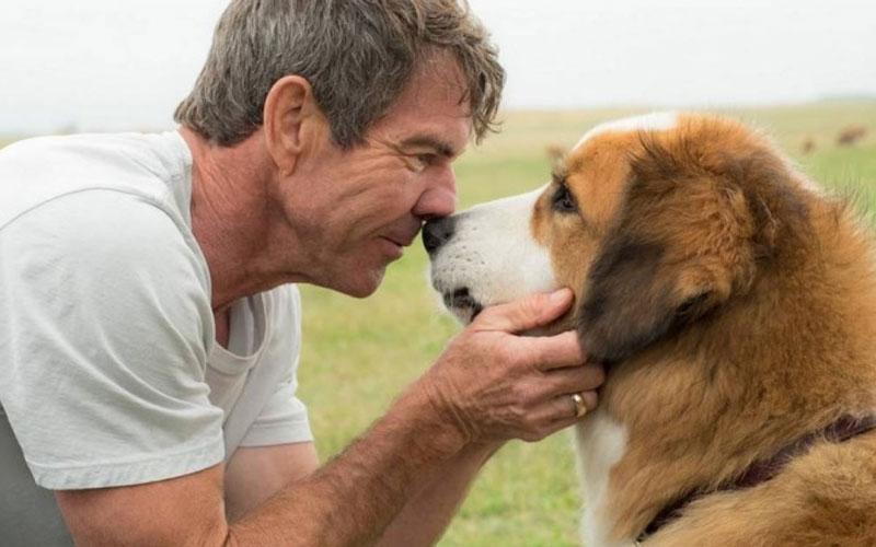 quatro vidas de um cachorro: cachorro e dono humano