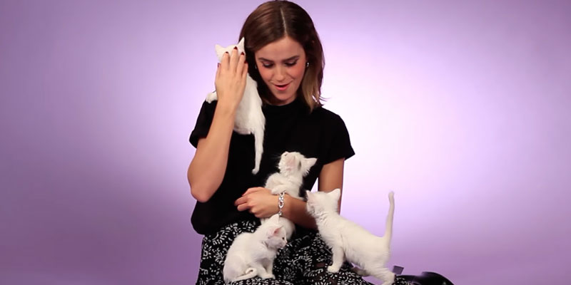 Emma Watson com gatinhos