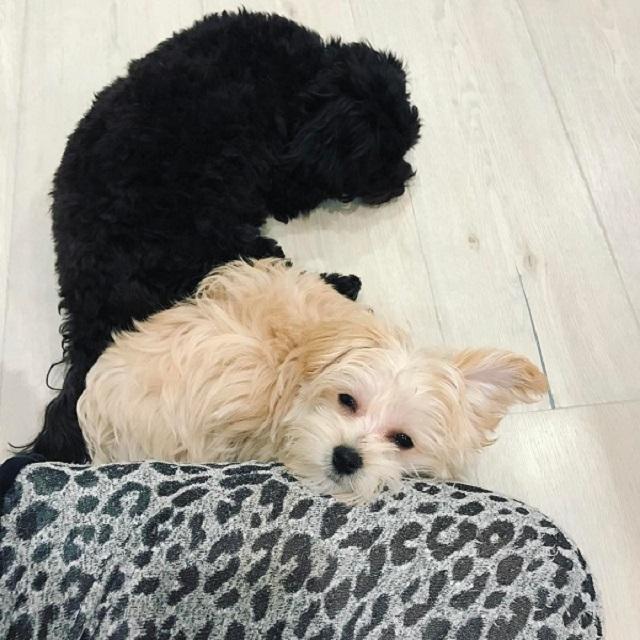 cachorrinhos da cantora Demi Lovato aparecem descansando juntos