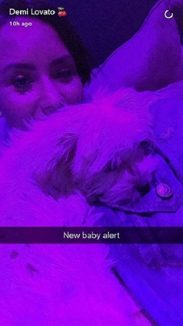 cantora Demi Lovato com seu novo cachorrinho de estimação em momento de relaxamento