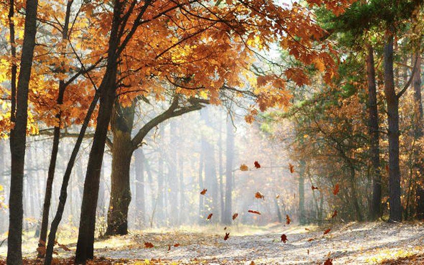 músicas de outono