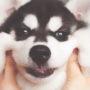 18 fotos de cachorros bochechudos para amassar MUUUITO!