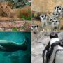 zoológico-aquário-férias de julho