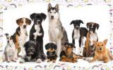 Faça o teste e descubra qual raça de cachorro é sua cara!