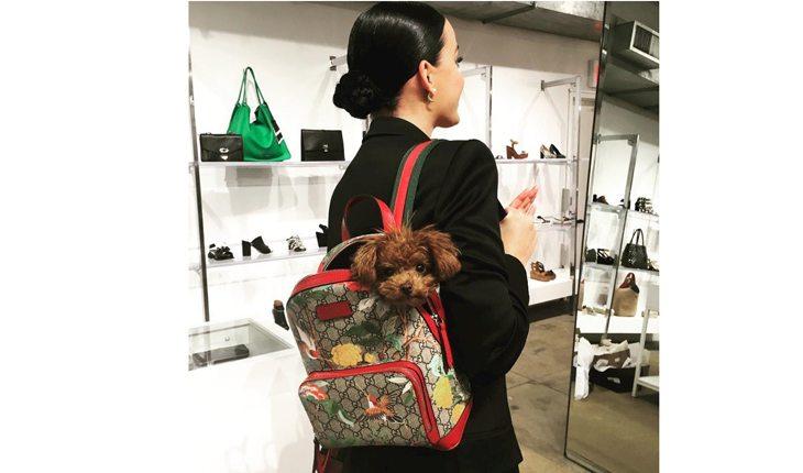motivos para amar katy perry