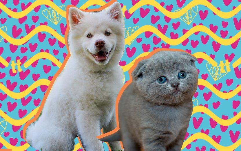 louca dos pets Animais fofinhos em montagem. Um gato cinza e um cachorro branco