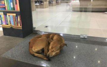 história de cachorro abandonado