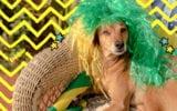 Cachorro torcendo para os jogos do Brasil na Copa