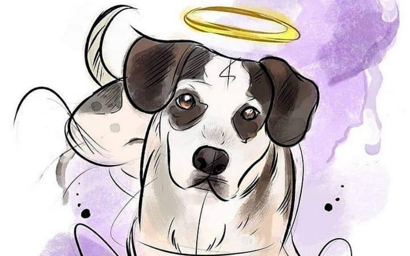 caso do cachorro que morreu