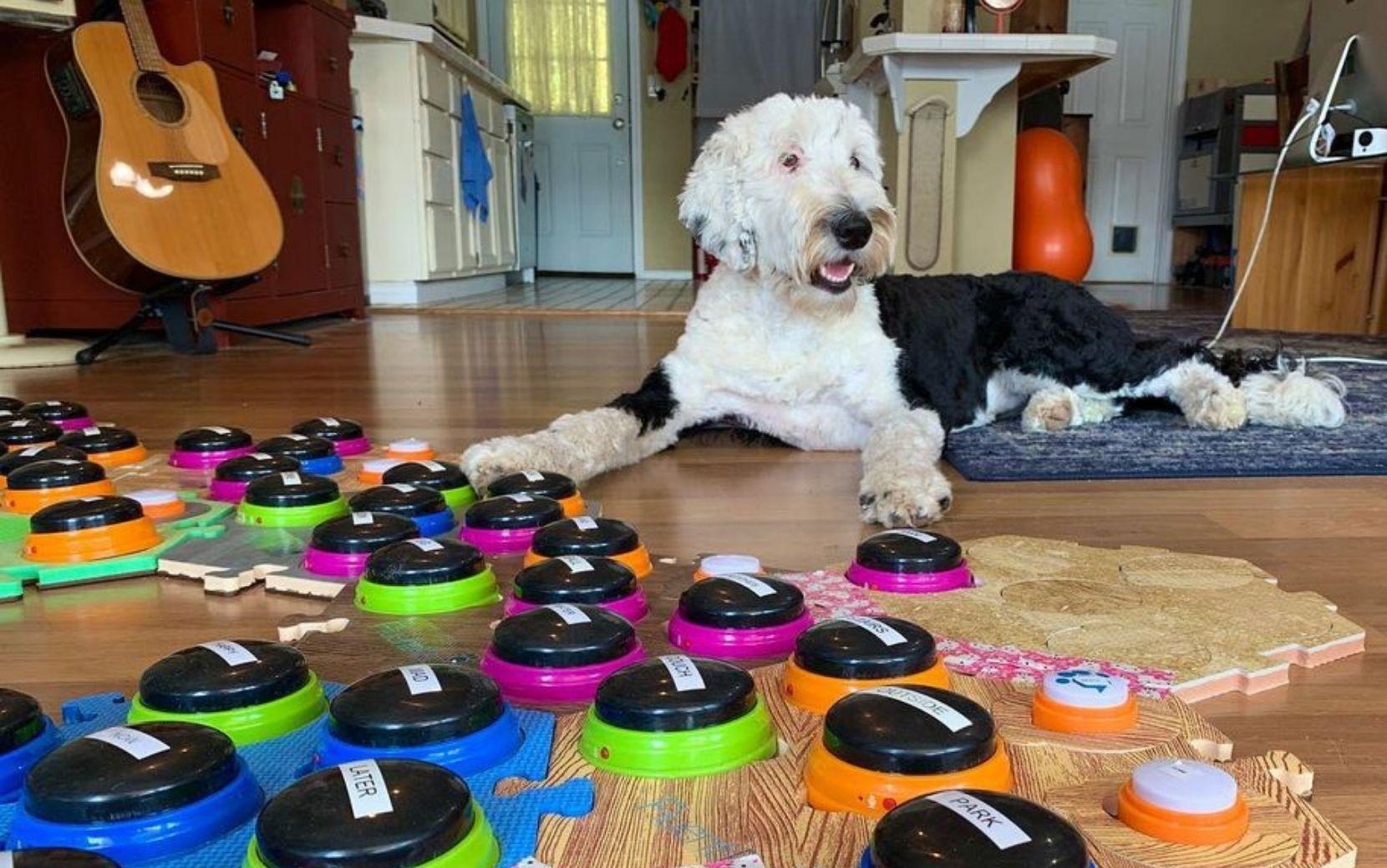 """Cão """"falando"""" por botões? Especialista em comportamento animal explica o que está por trás do fenômeno no TikTok!"""