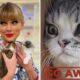 Taylor Swift explica ausência de sua gata nas redes sociais em vídeo hilário