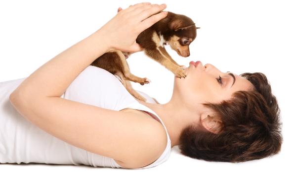 Dicas para quem deseja adotar um cãozinho